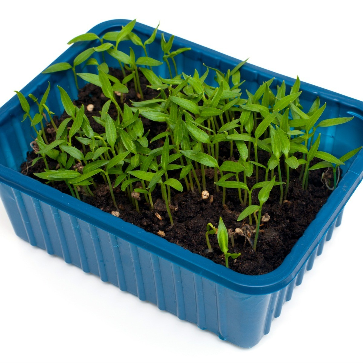 Using Plastic Containers In The Garden