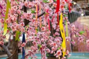Ribbons decorating a flowering bush.