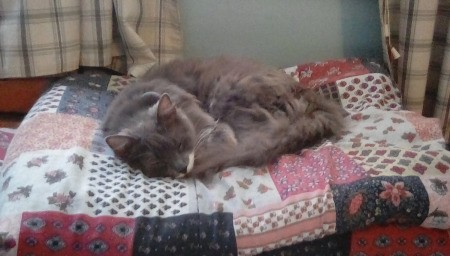A cat sleeping on a quilt.