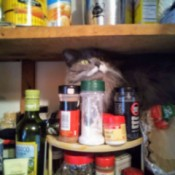 Mommy's Little Helper - Fuzzy in with the spices