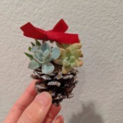 Succulent Pinecone Ornament - hand holding up the decorated cone ornament