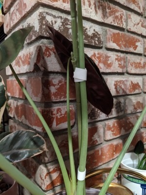Use Faux Flower Stems to Support Live Plants - plant wrapped at two places