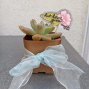 Let Love Grow Wedding Favor Gift - finished favor