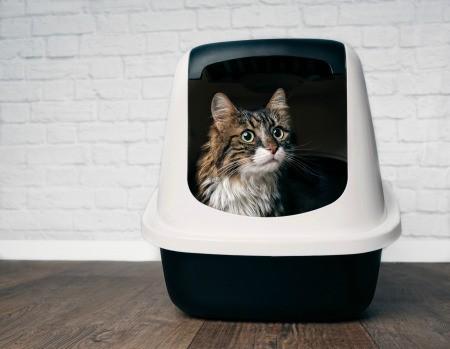 A cat inside a hooded litter box.