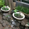 Using Old Sinks As Planters - old sinks planted with succulents sitting up on a garden wall