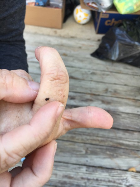 Identifying a Small Black Bug - bug on a person's finger