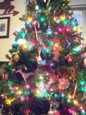 Baby Fuzzy - Fuzzy in the Christmas tree