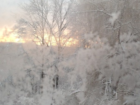Snowy Morning - trees covered in snow, sunrise in background