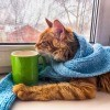 A cat in a window with a warm scarf and a cup of cocoa