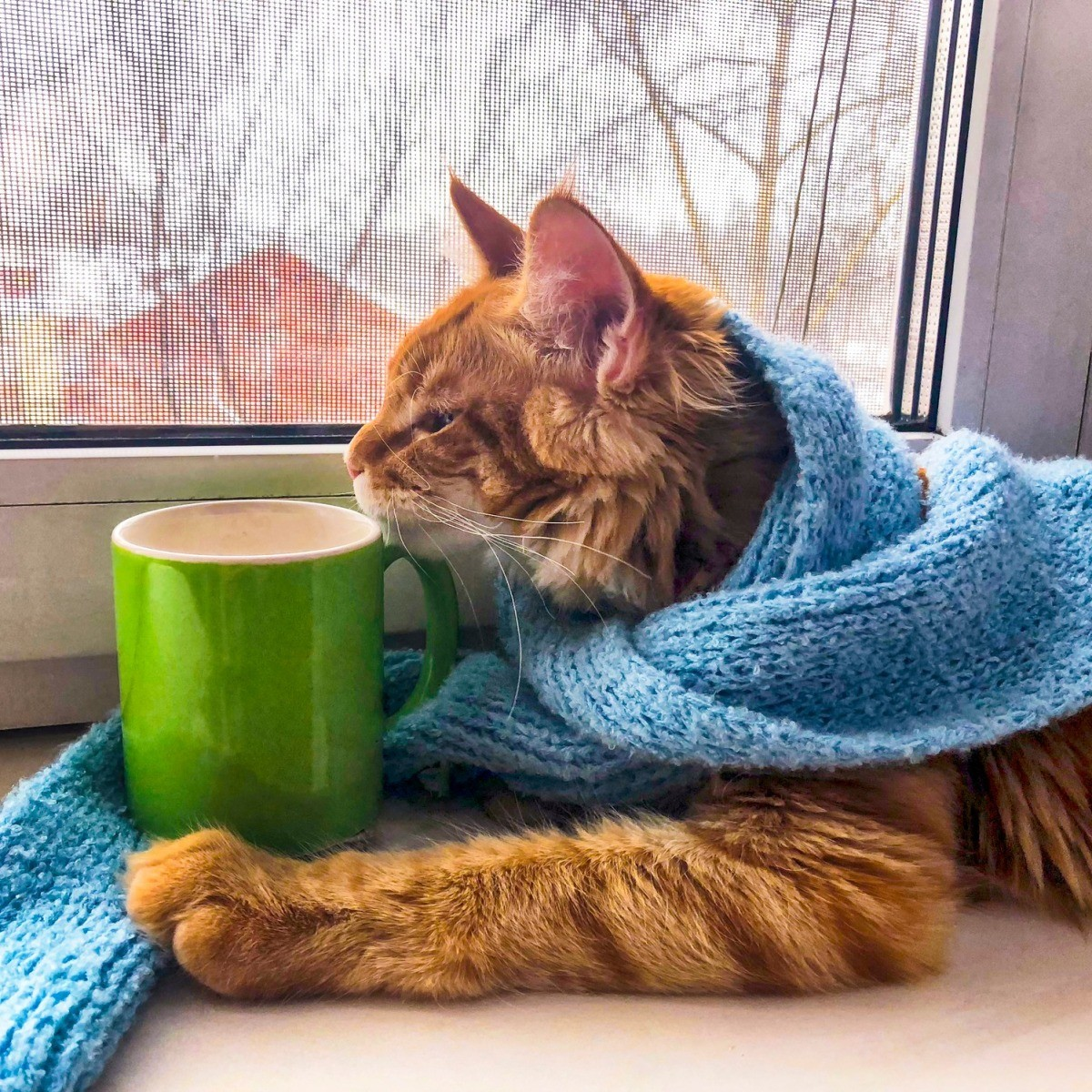 Keeping Cats Warm in Winter | ThriftyFun