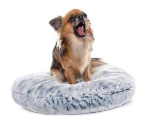 A dog sitting on a dog bed.