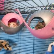 Setting Up A Rat Habitat - rats in hammocks