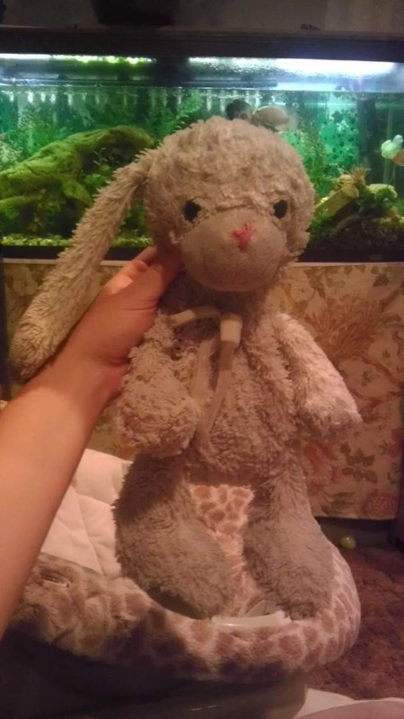 Identifying a Vintage Stuffed Bunny - well loved stuffed bunny