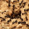 Closeup of an ant hill.