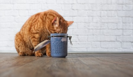 cat stealing food from a canister