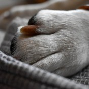 A dog's paw with long nails.