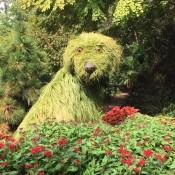 Atlanta Botanical Garden - shaggy dog topiary