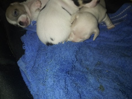 Selling Puppies to a Good Home