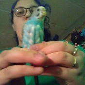 Parakeet Molting After Laying Eggs - woman holding a parakeet with bare spots