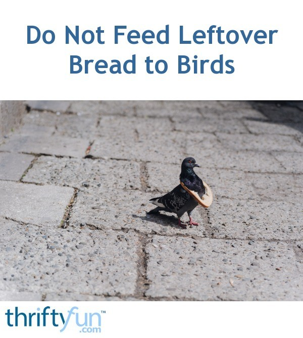 Do Not Feed Leftover Breads To Birds Thriftyfun