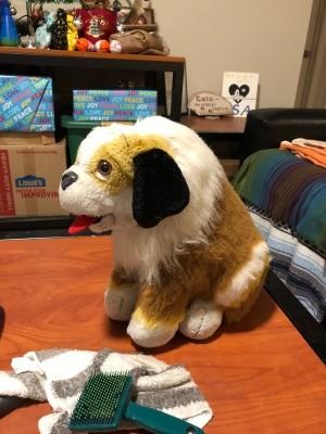 Original Photos of This Dog - tri-color dog