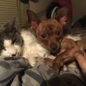 Dog Acting Scared After a Breaking Bottle Startled Him - dog and cat cuddling