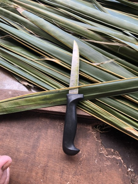 Making A Coconut Leaf Broom - remove the leaves from the main branch