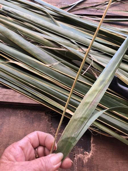 Making A Coconut Leaf Broom - folding leaves in half