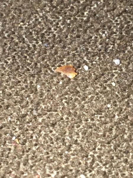 Getting Rid of Tiny Biting Bugs