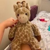 Identifying a Stuffed Giraffe - stuffed giraffe toy