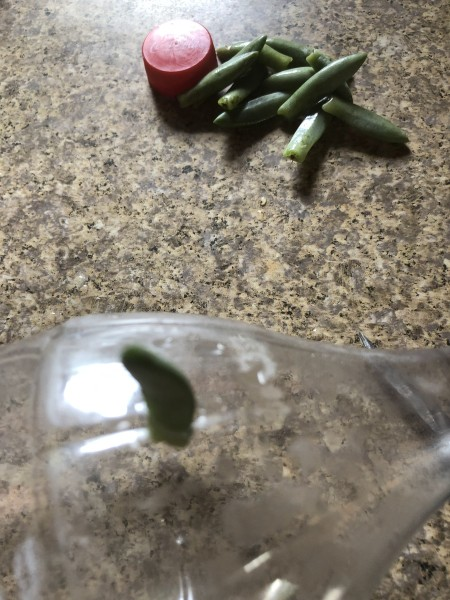 Succulent Plant Starter - insert the cut end of a succulent leaf into the hole in the bottle