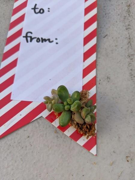 Succulent Gift Tag - closeup of succulent arrangement