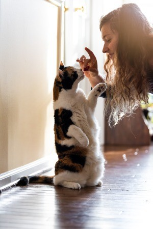A cat being trained with a treat.