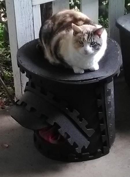 Cat Porch Sling