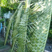 Coconut Leaf Panels - several panels