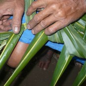 Coconut Leaf Panels - continue