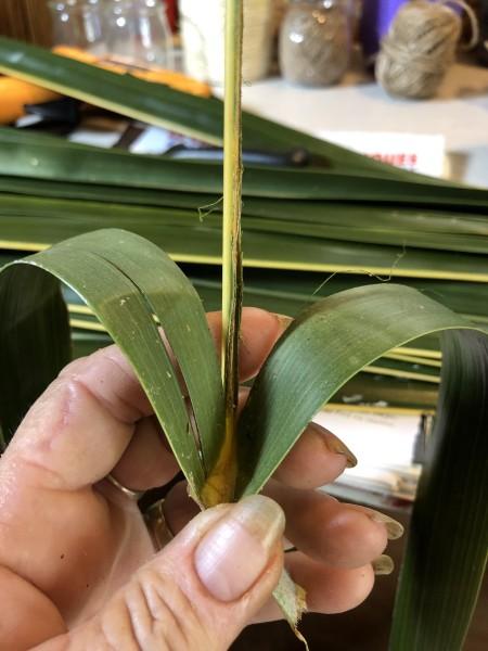 Making Woven Coconut Leaf Shrimp - holding leaf in a V shape
