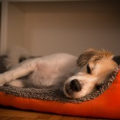 A puppy in a bed at night.