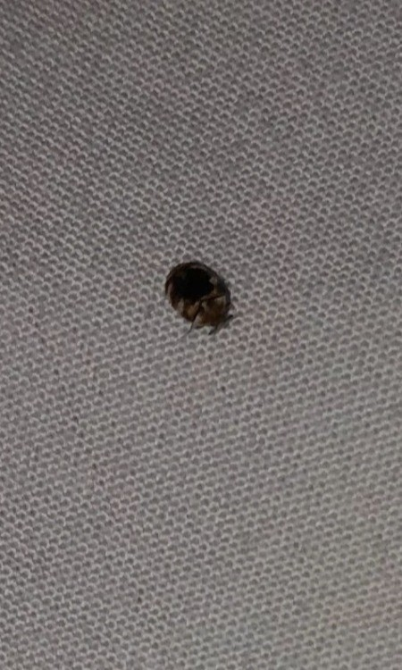 A small bug on a bed.