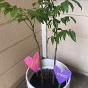 Heart Garden Stakes - stakes in a potted tree