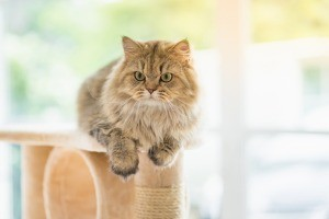 A cat on top of a cat tower.