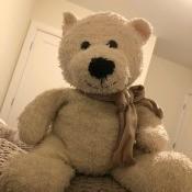 Identifying a Stuffed Toy - white stuffed bear