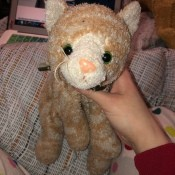 Identifying a Stuffed Toy Cat