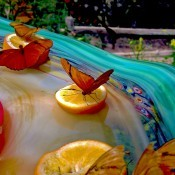 Butterflies Galore! - butterflies on orange slices in a shallow outdoor water filled basin