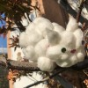 white cotton ball kitty in a tree