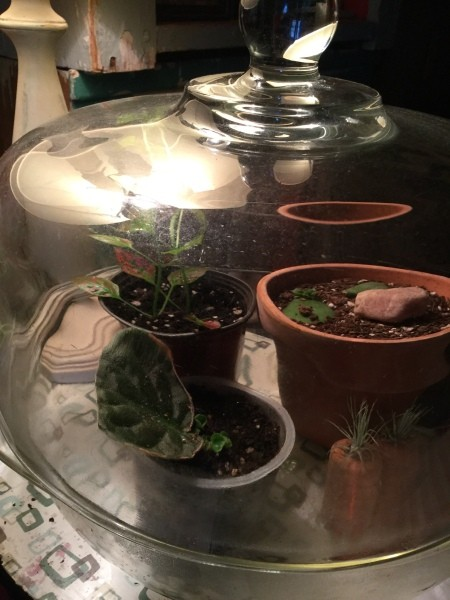 Grow New African Violets and Succulents from Cuttings - different angle