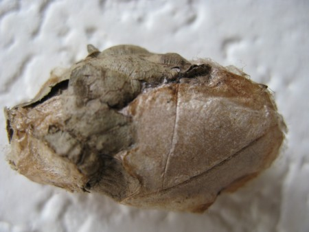 Identifying Egg Casings or Cocoons