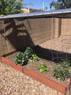 Protection from the Birds and the Sun - garden area with tarp sun protection and netting on sides to keep birds out