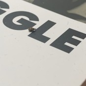 Identifying Household Bugs - black and tan bug on a box or piece of paper with lettering