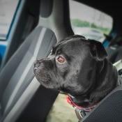A dog sitting in a car.